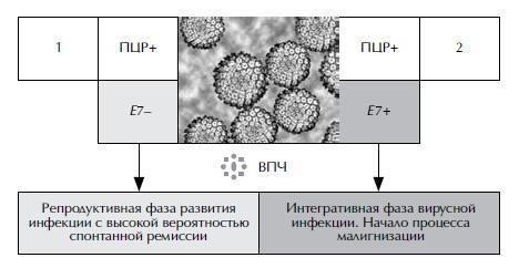 Диагностическая информативность лабораторных методов анализа на ВПЧ